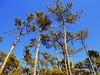 Árvore ao Céu (ashera08) Tags: ashera sedrul portugal paisagens photos picasa amizades árvores tree outras céus
