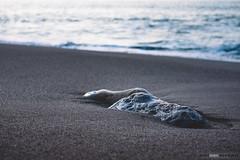 Gorrondatxe (jdelrivero) Tags: gorrondatxe mar geologia sunset rocas costa elementos olas provincia atardecer bizkaia playa geology beach elements puestadesol sea guecho euskadi españa es