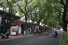 Tree lined road in Suzhou, China (mbphillips) Tags: china 中国 중국 中國 苏州 江苏 jiangsu 江南 jiangnan asia 亞洲 fareast アジア 아시아 亚洲 mbphillips sigma1835mmf18dchsm canon80d geotagged photojournalism photojournalist suzhou gusudistrict 姑苏区 姑蘇區