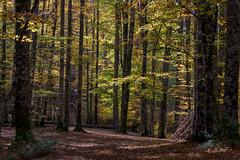 Luz y Sombra (cruzjimnezgmez) Tags: luz sombra otoño coloresdeotoño