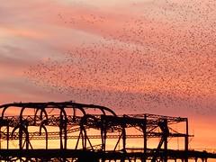 DSCN4837 (loolabub) Tags: murmuration brighton beach sunset southcoast brightonpier starlings seabirds
