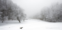Snow Bound 2014_diffused glow (Greg Reed 54) Tags: fog foggy winter snowstorm snowfall snowedin virginia blueridgeparkway mountain mountains blueridgemountains snowing