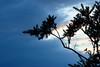 Soirée d'Automne (melanie.al) Tags: landscape coucherdesoleil branche paysage nuit rêverie bleu