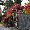 Fiery Fence Friday (Melinda Young Stuart) Tags: gate arbor vine red autumn friday hff holiday fall leaves foliage