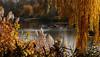 Autumn in Vienna 17.04 (lady_sunshine_photos) Tags: alcatel atmosphäre atmosphere at austria österreich europa europe farbwolke flickrexploreme ladysunshine ladysunshinephotos landschaft landscape natur nature outdoor platz space ruhe quiet herbst autumn sonyalphanex7 stille silence stimmung mood supershot theworldisbeautiful travel reisen wonderfulworld 2017 waterpark wasserpark park wasserparkfloridsdorf waterparkfloridsdorf vienna wien floridsdorf autumninvienna herbstinwien goldenlight goldennovember goldenernovember november wasser water birds vögel baum bäume tree trees pflanzen plants teich pond aut city stadt relax gelb yellow dreamland