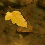 Leaf thumbnail