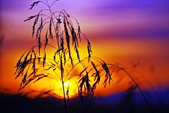 Tricolor (portalealba) Tags: zaragoza zaragozaparque aragon españa spain portalealba pentax pentaxk50 sunset sol atardecer nwn 1001nights 1001nightsmagiccity