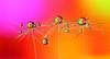 . (Lorraine1234) Tags: dandelion drops macro colors refraction focusstacking
