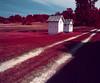 (Alex Bolen) Tags: aerochrome aero chrome infrared color medium format 120 orange filter 6x7 analog analogue michigan farm landscape pink red blue rb67 pro sd spy aerial sky grass field road