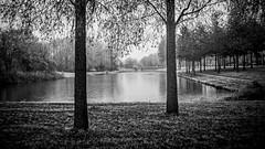 (Nico_1962) Tags: meer boom bomen zwolle nederland leica summaron leitz rangefinder meetzoeker ltm leicam thenetherlands winter