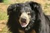 Knuddelig - cuddly (Noodles Photo) Tags: slothbear lippenbär melursusursinus safariparkbeeksebergen beeksebergen niederlande netherlands nl canoneos1dmarkiii ef100400mmf4556lisusm bär bear