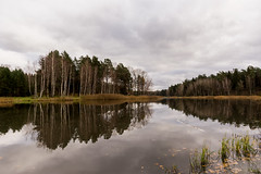The Naked Trees (modestmoze) Tags: trees forest park outside outdoors 2017 500px autumn mirror water lake reflection treeline green naked white clouds cloudy day nature landscape naturephotograph beautiful view calm fresh explore adventure hometown brown grass lithuania
