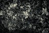 When moving from beauty to ugliness (Light & shadow believers) Tags: fall deadleaves maple rain monochrome wb bw season wet
