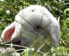 La mouche et l'agneau : nouvelle fable de La Fontaine - The fly and the lamb : a new fable of La Fontaine. (ldjacques) Tags: agneau mouche herbe fable lorraine lamb fly mammal