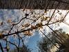 Mirando al cielo (Micheo) Tags: parra grapevine cielo nubes casadenico tarde luz azul hojas leaves autumn otoño
