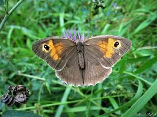 Butterfly 1526