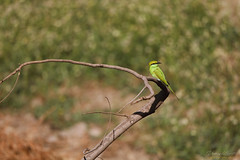uk 2G6A5051 (uday khatri photography) Tags: amazing art fine india udaykhatriphotography nature indian animal care color canon creative city child bird beautiful birds bulbul bee green eater flying flower full flowers flaying farm fineart wildlife lighte morning micro water white two
