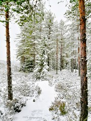 We found ourselves a nice trail, just Aiko and me and no other sound than my heart beat and a bird or two, sigh😊 (evakongshavn) Tags: winter winterwonderland snow snowtree forest wald arbre tree trees landscapephotography landscape landschaft landskap scenery norsknatur spruce winterspruce pine birch earthnaturelife natur naturerocks nature naturphotography natureart beautyinnature naturbilder naturescape naturelover naturephotography naturelovers fantasticnature naturaleza naturescenes new light white outside outsidepictures outdoors outhiking outdoor outdoorsphotography outdoorphotography photoshoot photooftheday unlimitedphotos photography photos photo photooftoday fineartphotography walk hikes hike serenity serene soulfood quiet