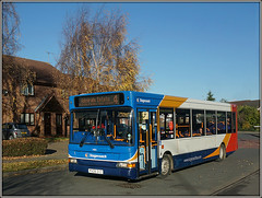 34815, Staveley Way (Jason 87030) Tags: brownsover rugby admirals estate house tree leaves autumn november 2017 birthday cake bus slf pointer px06dvz 34815 4 four wheels warwickshire route service sunny cold roadside staveleyway drive residence leaf lighting weather uk england publictransport amateur ilce nex shot photograph transportation neighbour collection enthusiasm path driveway bluesky sweetshot 400 warks silverbirch lingerie curtains nissan micra shadows doors stagecoachmidlands stagecoach