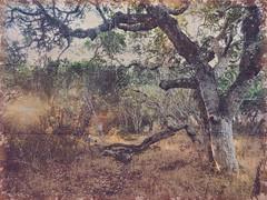 Forgotten Fort Ord Perimeter (DeeAshley) Tags: woods wilderness a7rii autumn forest edit west nature november backroads ord ca foliage editado california fall trees sony 2017 fortord