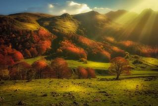 Veleat Autumnus