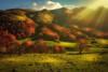 Veleat Autumnus (Blai Figueras) Tags: panorama montañas mountains sunbeams sunrays landscape horizon rayos atmosphere árboles colours pirineos red paraiso trees eden sun paradise colores paisaje emotions naturaleza sol flickr valdaran energia forest emotional autumn nature energy cielo clouds