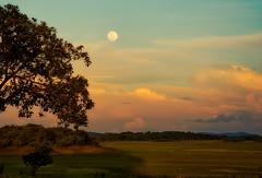 The Big Moon...!! (Nita_Fotos) Tags: moon bigmoon clouds tree atardecer moonligh brillodeluna ocaso montain montaña arbol nubes naranja azul lecheria venezuela tuniñasalvajedelaselva