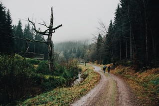 days where the sun never comes out and the forest leaves you cold and damp. (3:34 pm)