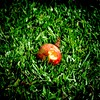 Paradise for a butterfly (Billy W Martins ) Tags: butterfly apple grass green nikon d7100 florianópolis floripa lagoadaconceição nature natureza maçã paraíso paradise grama verde inseto bug insect happy feliz