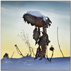 The Forgotten Sunflower (pixel_unikat) Tags: sunflower winter snow dead plant sky sunset cold