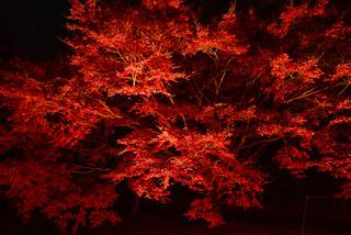 Autumn Night illumination #1