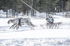 Khanty-61 (Polina K Petrenko) Tags: farnorth ruskinskaya russia siberia culture deer ethnic holiday indigenous khant khanty localpeople nikon reindeer traditional