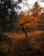 More autumn colors (catha.li) Tags: lgg4 sweden autumn autumnleaf forest forestimages soe naturewatcher naturereserve wildnature swe