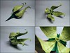 Clematis sibirica by Dzmitry Lysiuk (Artyom Romenskiy) Tags: paper origami dzmitrylysiuk ioio 2017 round1 task1 clematis sibirica