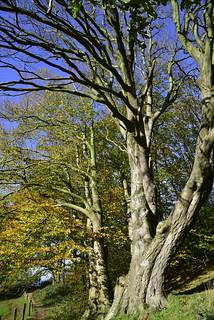 Herbstspaziergang - Buche auf dem Aschberg, Naturpark Hüttener Berge (6)