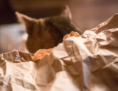 136: A cat and his paper