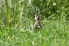 Happy Birthday :-)) (Anja van Zijl) Tags: duck ente entlein entenküken eend duckling animal tier dier bird
