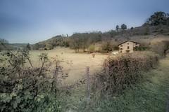 Fence in Beaujolais (Sizun Eye) Tags: fence hff rural peaceful rhône beaujolais cow house meadow autumn france sizuneye nikond750 nikkor1424mmf28