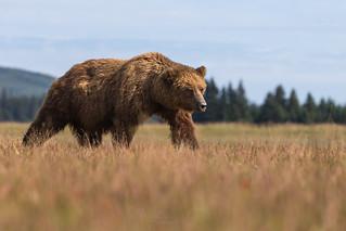 Bear Meadows  0110