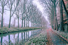 A l'aube de l'hiver. (musette thierry) Tags: musette thierry d600 nikon perspective rouge brume automne hiver autumn novembre belgique