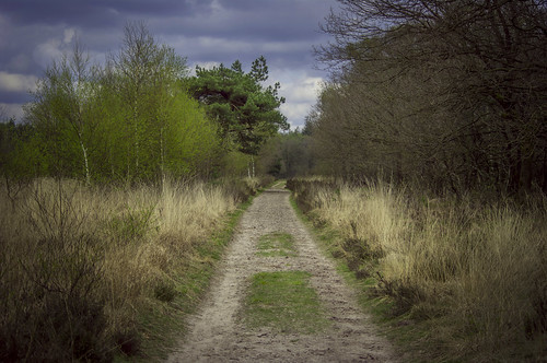 Dividing path