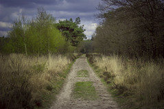 Dividing path (Ivo Vastre) Tags: radio kootwijk path dividing colours two parts green red yellow nature road trail outdoor landscape ivo vastré ngc