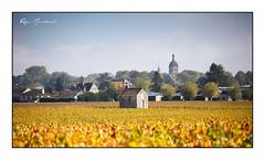 Beaune et son vignoble (Rémi Marchand) Tags: vignoble vigne beaune côtedor bourgogne automne france canon5dmarkiii ville