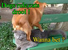 Wait for it.... (Chikkenburger) Tags: icanhas animals cats kitties lolcats lol funny cheezburger chikkenburger