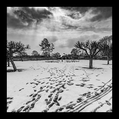 Just a Reminder (Martyn.A.Smith LRPS) Tags: outdoors snowscene monochrome clouds trees footprints baddesleyclinton nationaltrust squareformat canon7d warwickshire englanduk