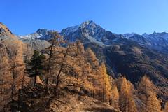 Arolla (bulbocode909) Tags: valais suisse arolla valdhérens montagnes nature automne arbres forêts mélèzes paysages bleu orange neige