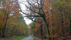 Landschaft (petra.wruck) Tags: landschaft landschaften landscape landscapes herbst autumn wald