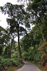 India - Kerala - Munnar - Road - 250 (asienman) Tags: india kerala munnar teaplantagen asienmanphotography