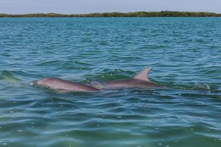 Sian Ka'an dolphins