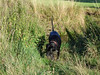 Eager (Lexie's Mum) Tags: continuing30dayswild walking walks walkingthedog nature wildlife scenery floraandfauna dog lester